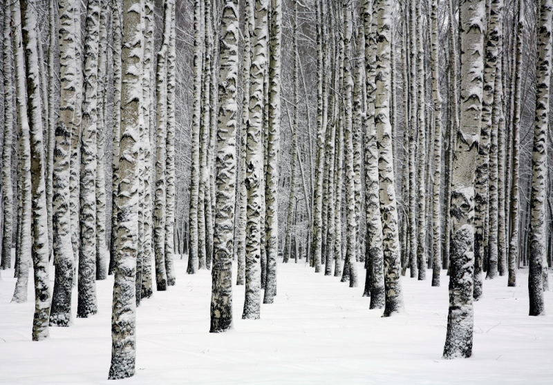 Your Essential Guide To Birch Water and Its Potential Uses For Your Food Establishment