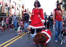 How To Get Your San Diego Pet and Pet Friendly Home Ready For The Holidays