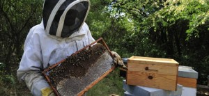 Removing Beehives in Your Home by Hiring Good Beekeeping Services