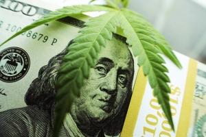 Starting A Successful Marijuana Business
